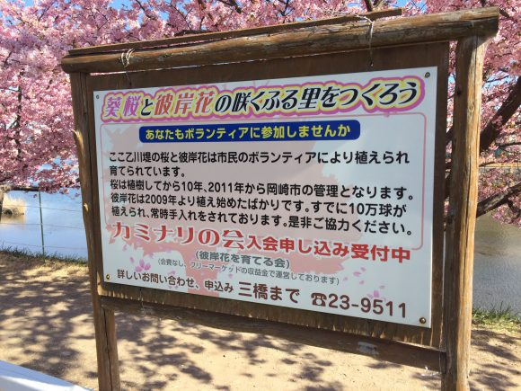 葵桜 看板